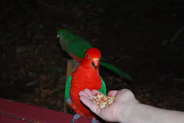 Parrot Visitor