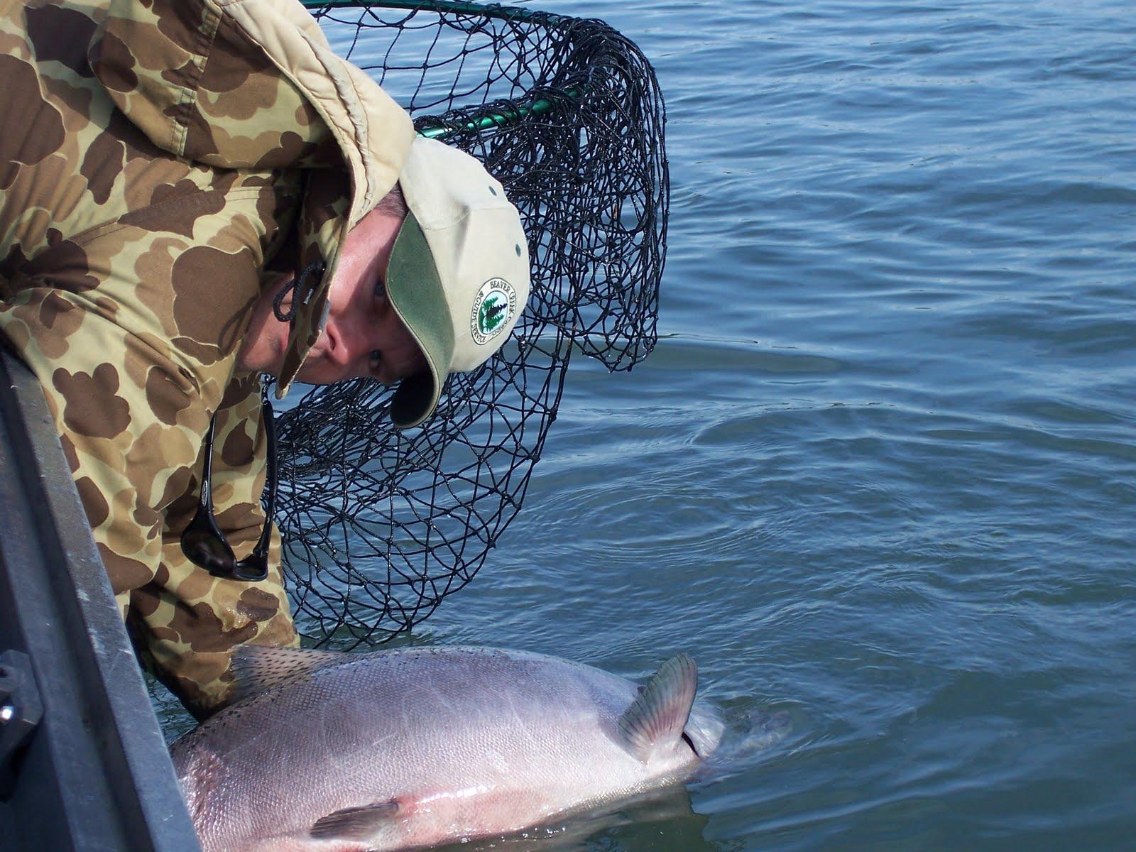 Beaver creek cabins guide service kenai river to reopen for Kenai river fish counts