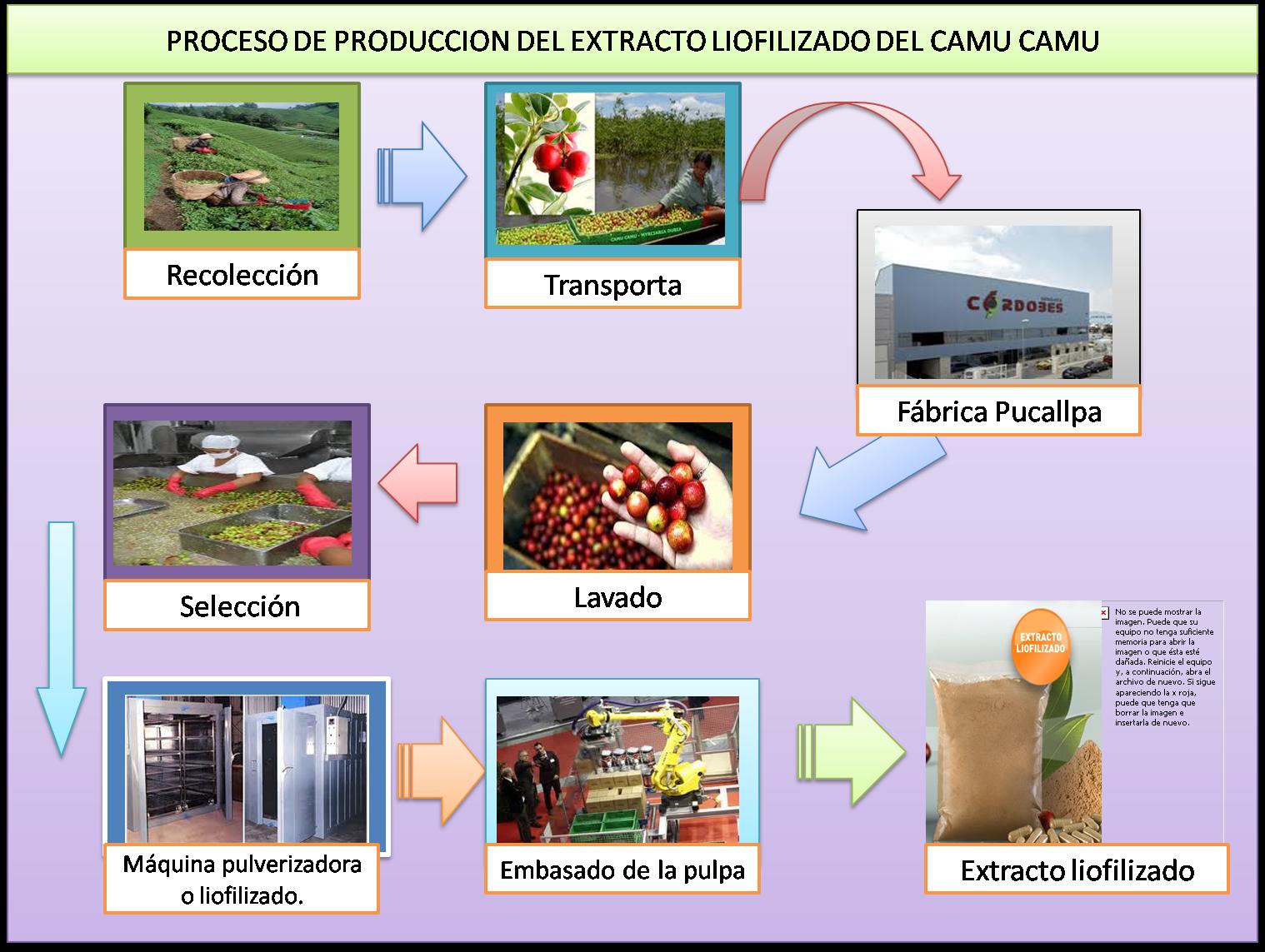 Camu camu entrevista a la empresa yamano del per s a for Procesos de produccion de alimentos