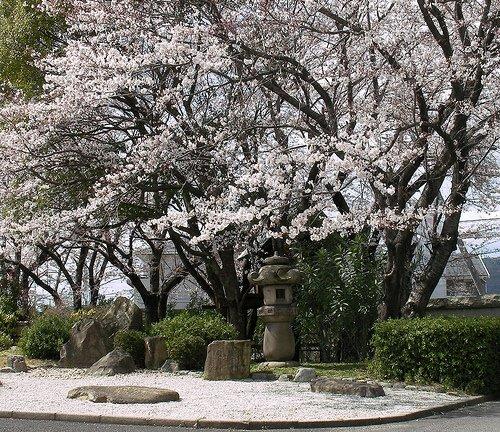 yokaichi chat Le 22 février, c'est la journée nationale du chat au japon  tokyostreetview : découvrez la rue yokaichi du centre histoire d'uchiko jeu 24 mai 2018 0.