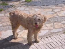ANIMALES PERDIDOS EN TODA ESPAÑA