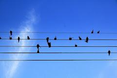 """Sense música la vida seria un error""  Friedrich Nietzsche"