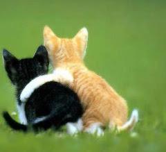 """""""Queda't"""" és una bella paraula en el vocabulari d'un amic"""""""