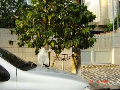 Gato em cima de carro