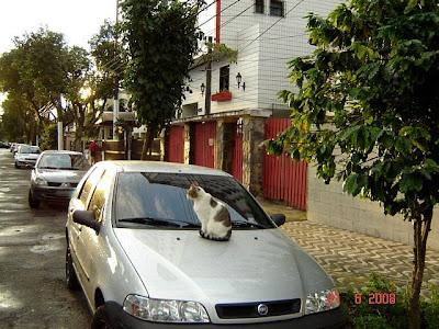 Gatinho em cima de um carro, em rua de Santos