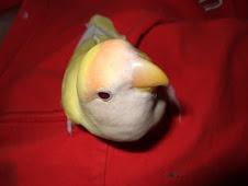 """<a href=""""http://www.birdchannel.com/blog/viewbio.aspx?apid=13234"""">RIP Angel - 10/15/06- 7/30/07</a>"""