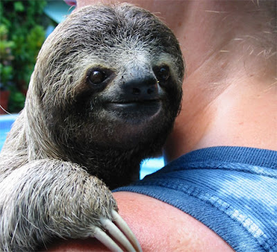 Not Sloths, On Page Optimisation!