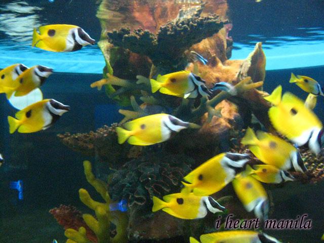 Real ocean fish - photo#6