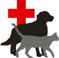 Pet Health Insurance 101