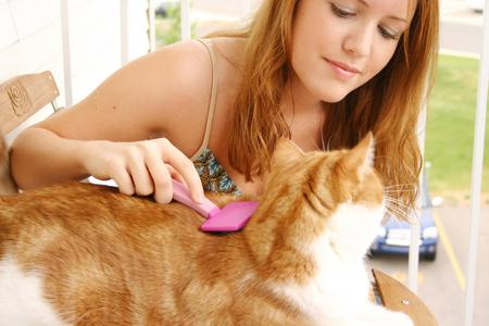 рыжую кошку девушка расчесывает и показывает как ухаживать за шерстью