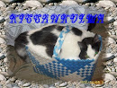 Kissa sivu