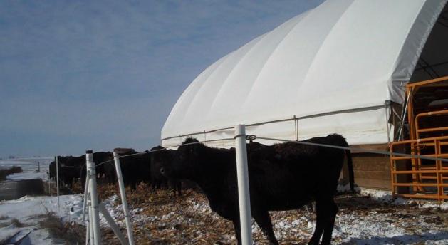 [Cattle+next+to+hoop.jpg]