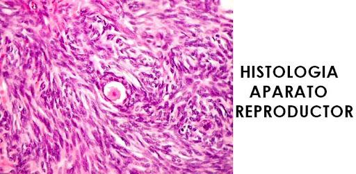 Histologia del Aparato Reproductor
