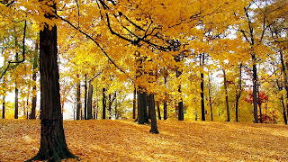 Autumn Trees - Nature Wallpaper