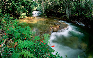 Fonte de Brasil Nature Wallpaper