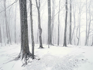 Trees Snowy Nature HD Wallpaper