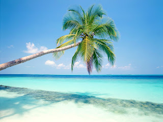 Coconut Tree Blue Sea Nature HD Wallpaper