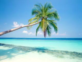 Coconut Tree Blue Sea Nature HD Wallpaper