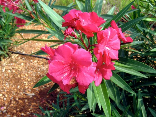 Beautiful Plants in The World Plants in The World And