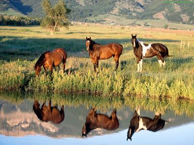 Horse Standard Resolution wallpaper 1