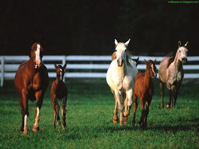Horse Standard Resolution wallpaper 2