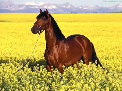 Horse Standard Resolution wallpaper 4