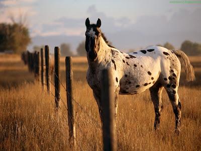 Horse Standard Resolution wallpaper 7