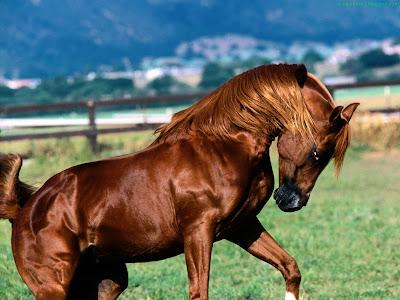 Horse Standard Resolution wallpaper 15