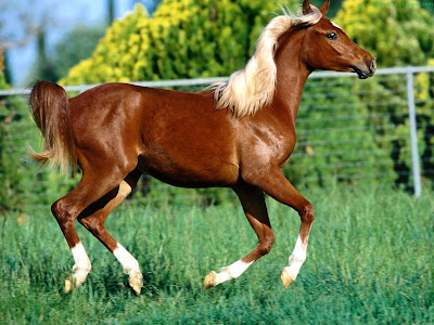 Horse Standard Resolution Wallpaper 46