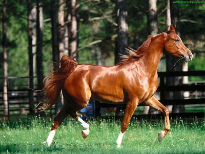 Horse Standard Resolution Wallpaper 69