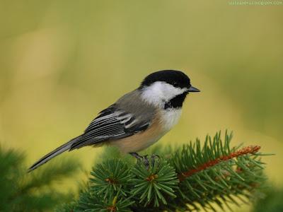Bird Standard Resolution Wallpaper 55