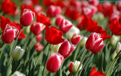 Flower Standard Resolution Wallpaper 126