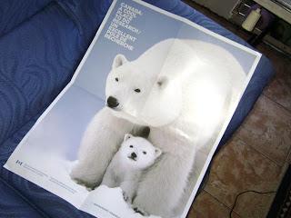 Brinde Gratis Pôster Urso Polar