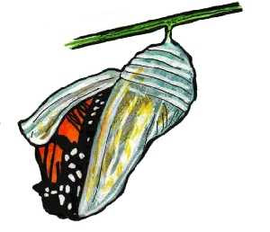 Cartoon-Butterfly-Cocoon-Cartoon
