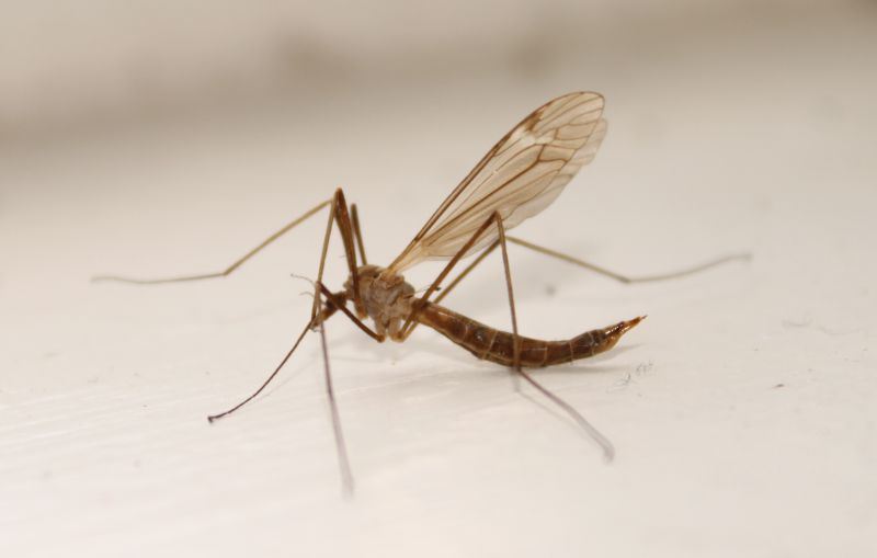 Tip Of The Day How To Get Rid Of Mosquitoes Easily