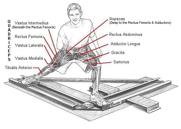 hipsk8  today u0026 39 s anatomy lesson