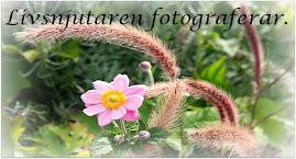 Min Fotoblogg