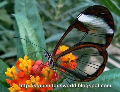 Unbelievable Pictures of Butterfly