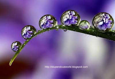 Amazing  WaterDrop Photos