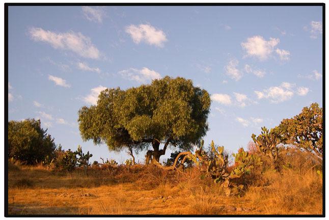 ----Arboles de la Sierra---