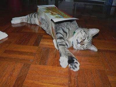 Why Do Cats Like Cram