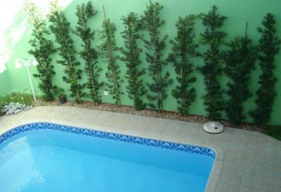 A piscina cercada de verde