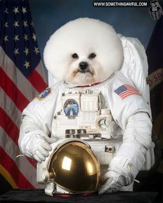 me presento desde el ciberespacio 7.+perro+astronauta