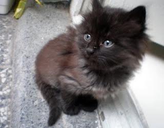 черно коте, кастрация