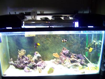 Aquatic jungles lexington home of dustin 39 s fish tanks 90 for Dustins fish tanks