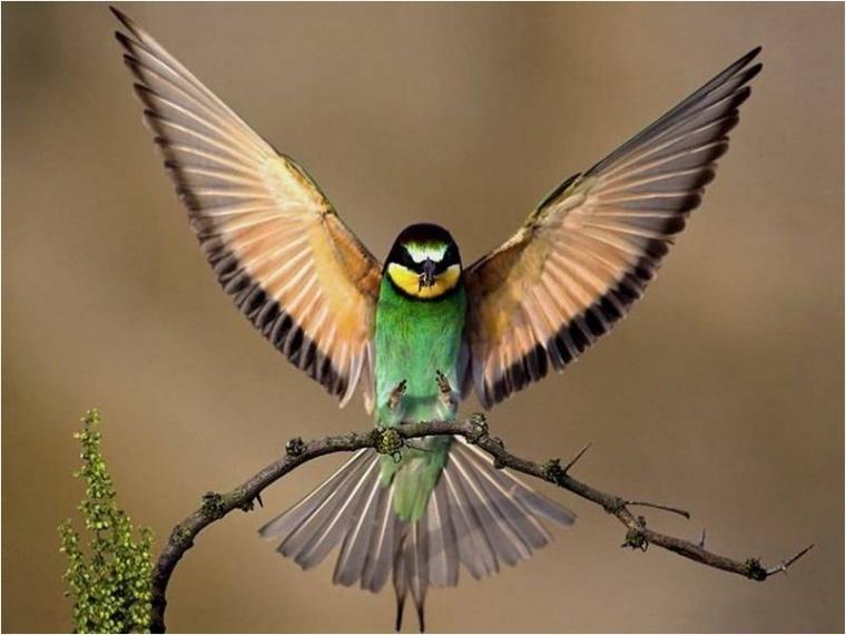 Tengo que acordarme de que algunos pájaros no pueden ser enjaulados,