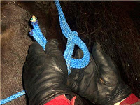 Step 2: Tying a Rope Halter