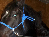 Correctly Tied Rope Halter
