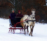 Driving Single-Horse Sleigh