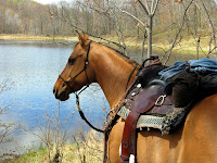Quarter Horse Tied on Trail with Rope Halter